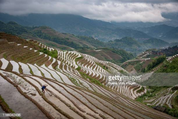 longsheng (longji) rice terraces, guilin, guanxi, china - terraced field stock pictures, royalty-free photos & images