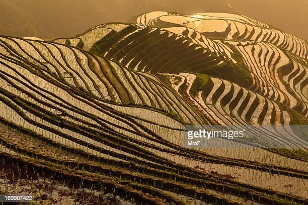 Longsheng rice terraces