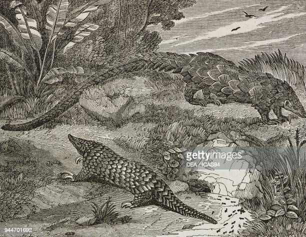 Longtailed pangolin and Chinese pangolin illustration from Teatro universale Raccolta enciclopedica e scenografica No 271 September 14 1839