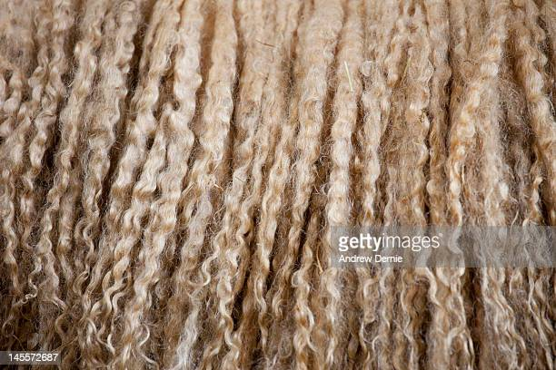 longwool - andrew dernie stock pictures, royalty-free photos & images