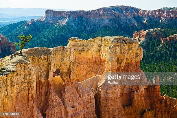 Lonly Tree in Bryce Canyon Utah USA