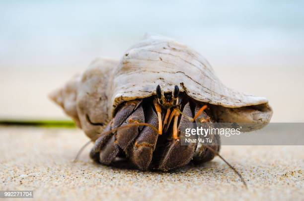 look at me now - hermit crab stock pictures, royalty-free photos & images
