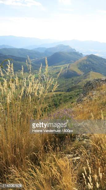 look at you or me in a face - alpes de haute provence stock photos and pictures