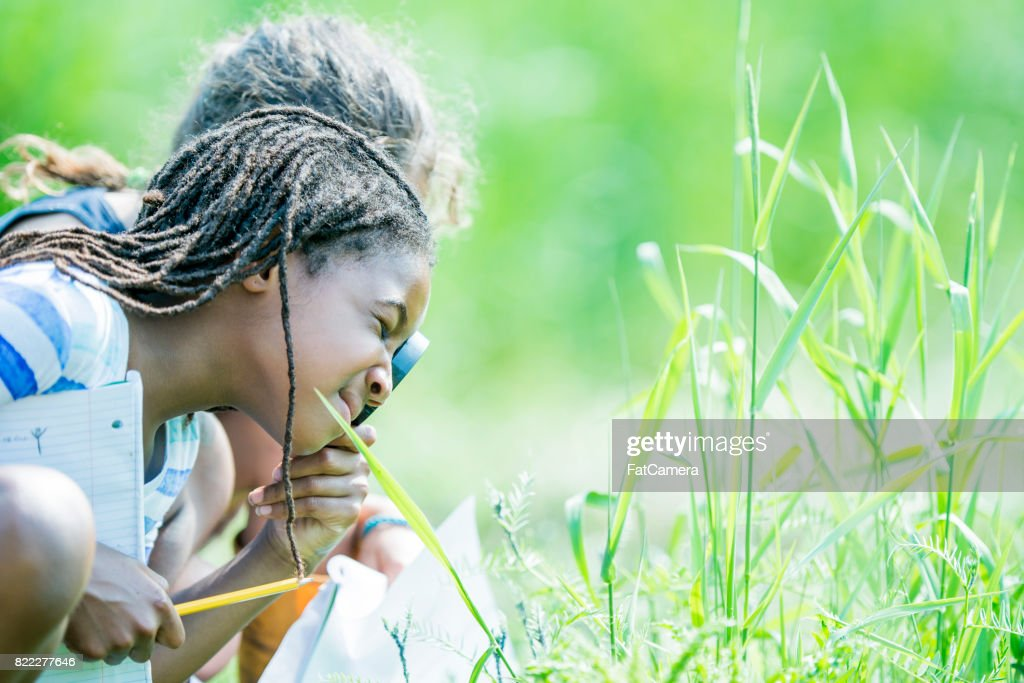 Look In The Grass : Stock Photo