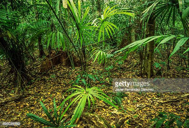 Look inside the jungle of Peten, Guatemala.