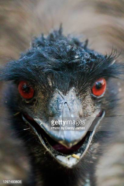 look into my eyes - port macquarie stock pictures, royalty-free photos & images