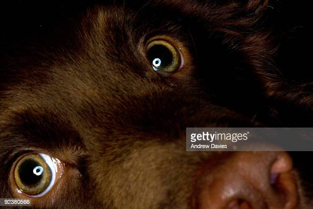 look into my eyes - extreme close up stock pictures, royalty-free photos & images