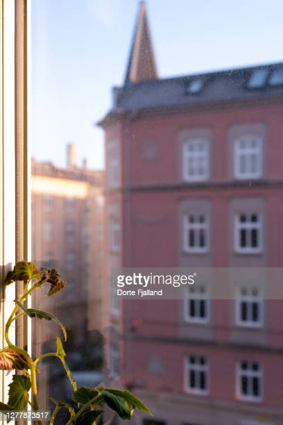 look through a stained window on the pink facade of an apartment building - dorte fjalland fotografías e imágenes de stock