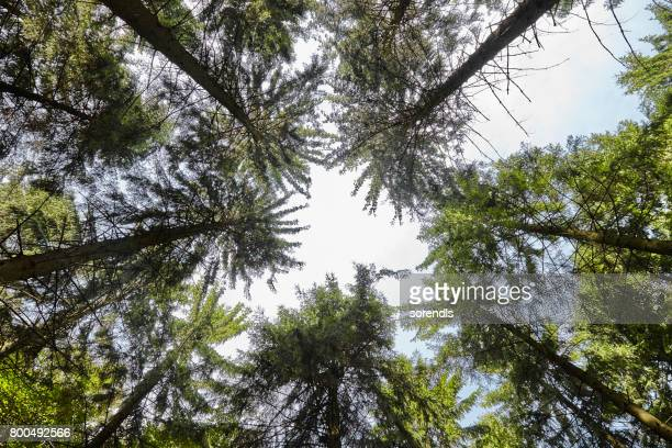 Look up in a dense forest