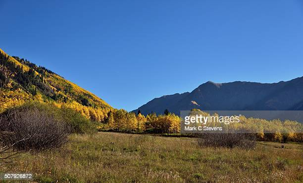 looking across a grassy meadow to aspen trees and mountains - white river national forest stock photos and pictures