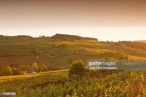 Looking across burgundy vineyards near to Beaune