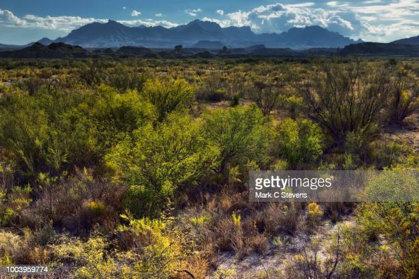 looking across the chihuahuan desert to peaks of the chisos mountains - chisos mountains stock pictures, royalty-free photos & images