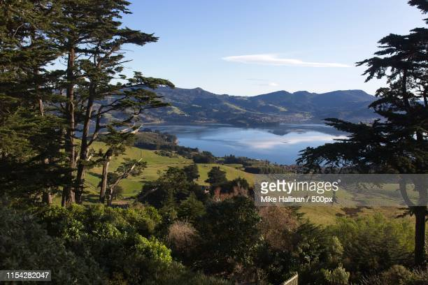 looking across the otago harbour toward roseneath from larnach castle just outside dunedin, - dunedin new zealand stock pictures, royalty-free photos & images
