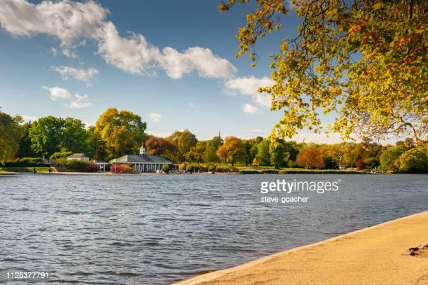 秋の日にロンドンの有名なハイドパークの蛇紋岩の間で探しています。 - ロンドン ハイドパーク ストックフォトと画像