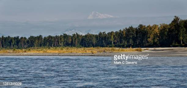 looking across the susitna river with a view to denali - mt. susitna stock pictures, royalty-free photos & images