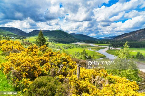 looking along river dee at braemar linn of dee.  marr estate.  aberdeenshire, scotland. - braemar stock pictures, royalty-free photos & images