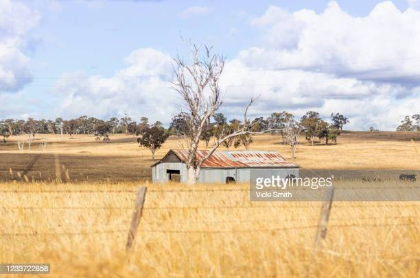 looking at an old building in the country through the wheat grass at sunrise with clouds and blue sky - tamworth australia stock pictures, royalty-free photos & images