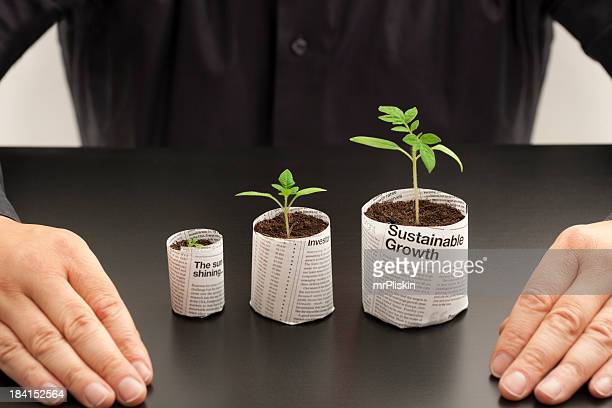 looking at investment options - money tree stock photos and pictures
