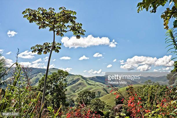 looking at mountains on sunny day - queensland umbrella tree stock pictures, royalty-free photos & images