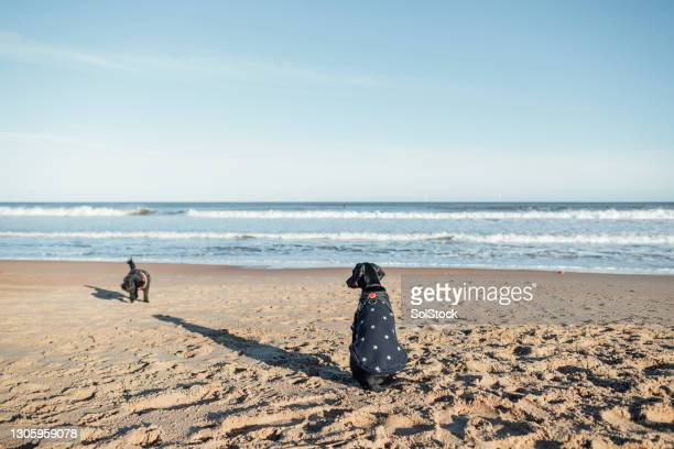 looking at the ocean - pet clothing stock pictures, royalty-free photos & images