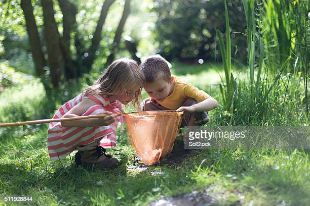 looking at the pond life - child stock pictures, royalty-free photos & images