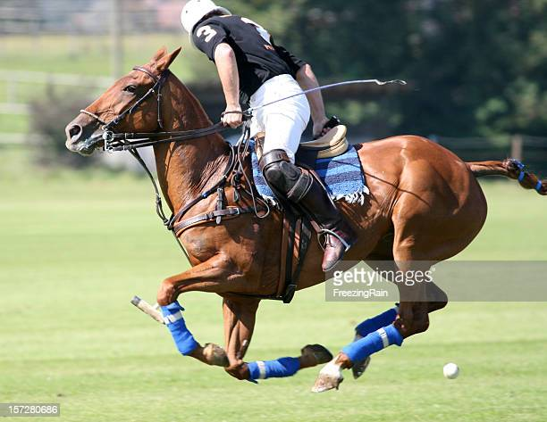 looking back - polo stock pictures, royalty-free photos & images