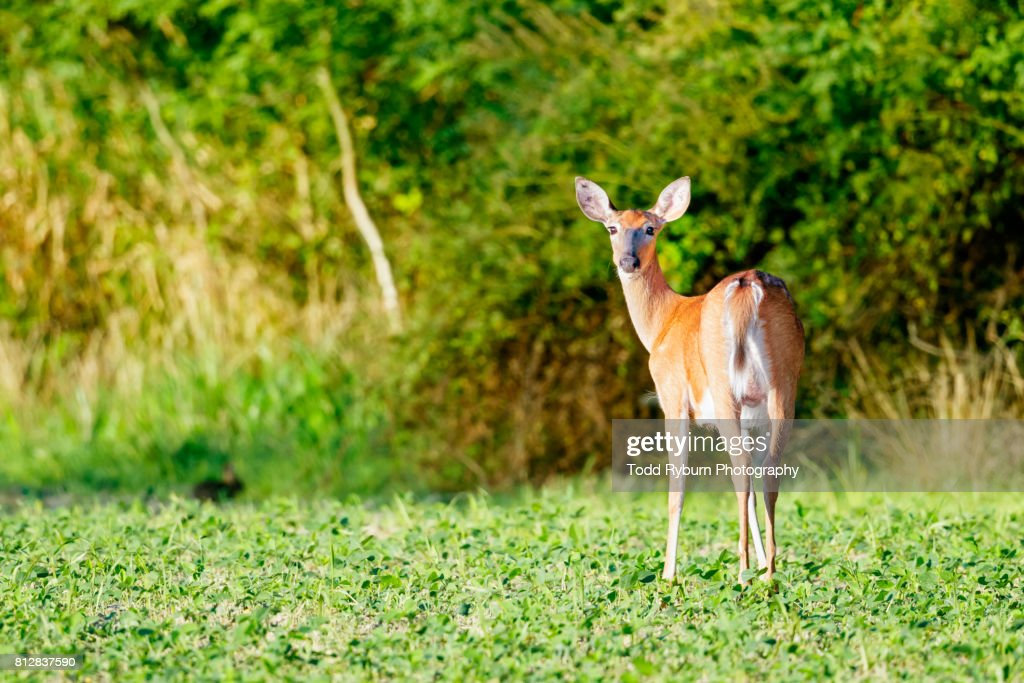 Looking back : Stock Photo