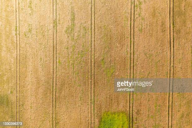looking directly down onto a cereal crop field - johnfscott stock pictures, royalty-free photos & images