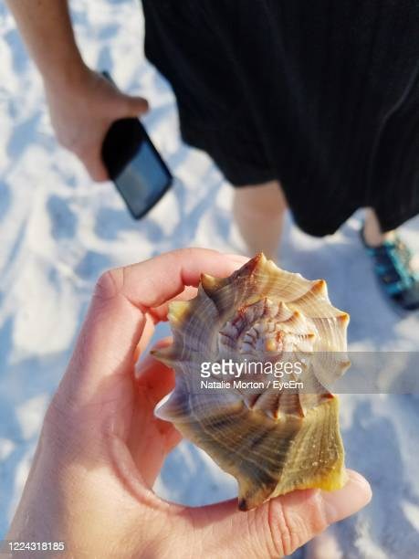 looking down at a beautiful seashell - siesta key stock pictures, royalty-free photos & images