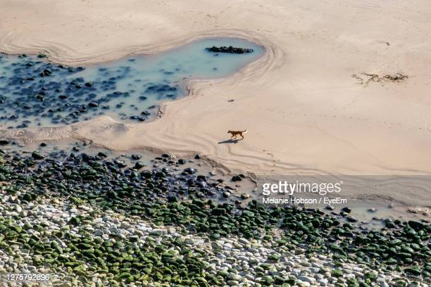 looking down from a cliff at a dog on a sandy beach, at compton bay, isle of wight - compton bay isle of wight stock pictures, royalty-free photos & images