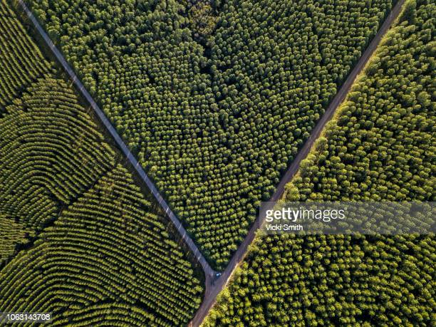 looking down on a pine forest - sunshine coast australia stock pictures, royalty-free photos & images