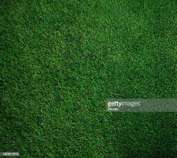 Looking down on a pure green square of moss