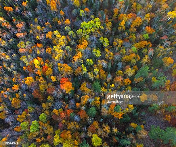 looking down on autumn colors at the last light - treetop stock pictures, royalty-free photos & images