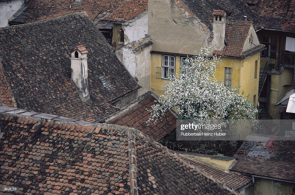 looking down on shingled roofs and buildings with their chimneys and trees : Stock Photo