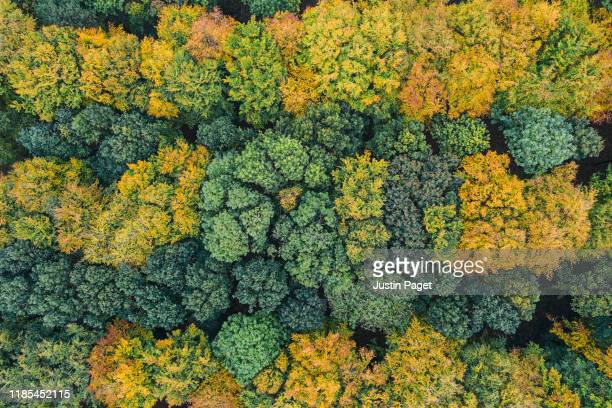 looking down onto autumnal forest - woodland stock pictures, royalty-free photos & images