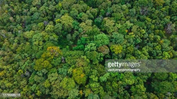 looking down onto autumnal forest - árbol de hoja caduca fotografías e imágenes de stock