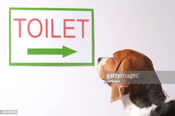 Sie suchen eine Toilette