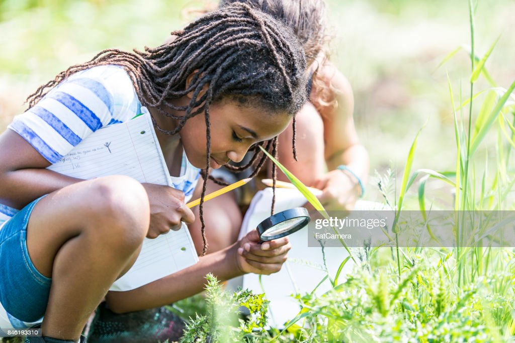 Looking For Bugs : Stock Photo