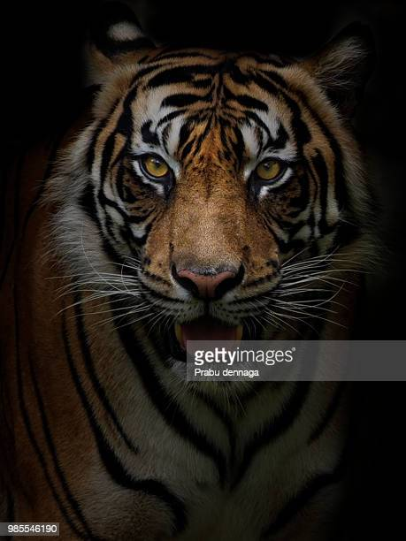 looking for.. - animal head stock pictures, royalty-free photos & images