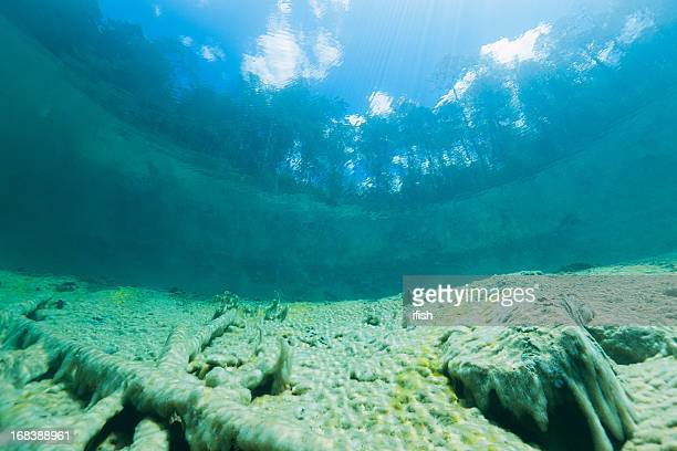 looking into the forest outside water from lake samarang, austria - lake bottom stock photos and pictures