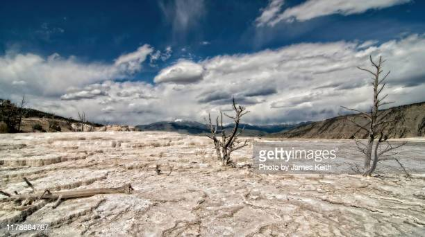 looking like an alien landscape, the upper terrace of mammoth hot springs, - extinct stock pictures, royalty-free photos & images