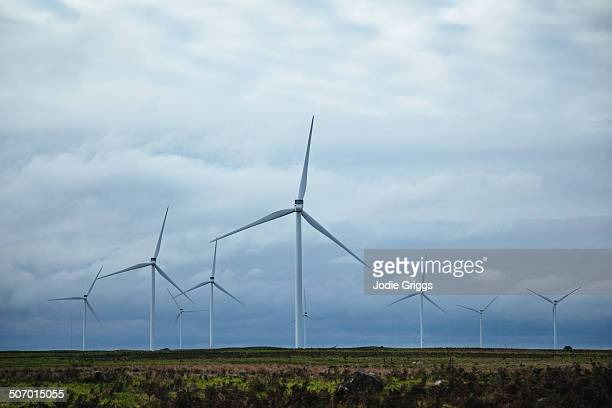 Looking out across a wind farm in an open field