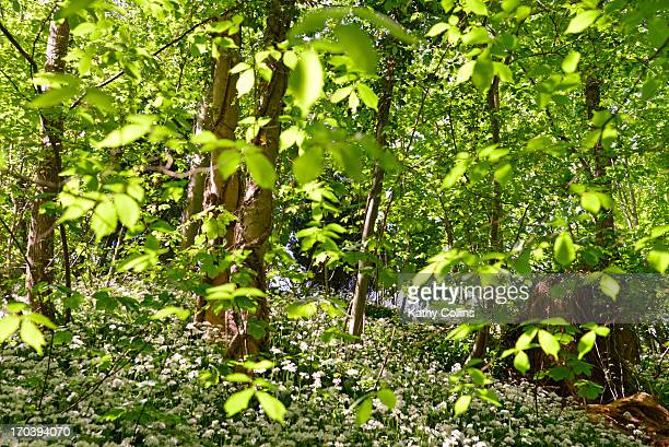looking through leaves and forest branches - crieff stock pictures, royalty-free photos & images