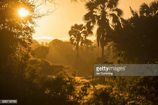 Looking through the bush at sunrise, Liwonde National Park; Malawi