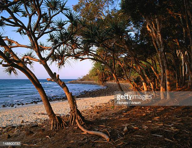 Looking through trees at Tea Tree Beach in Noosa National Park