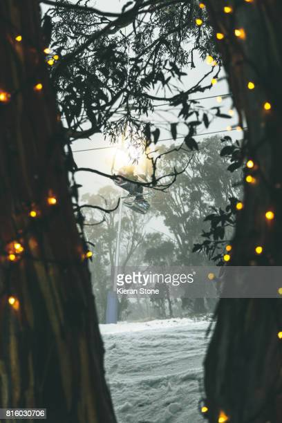 Looking through trees