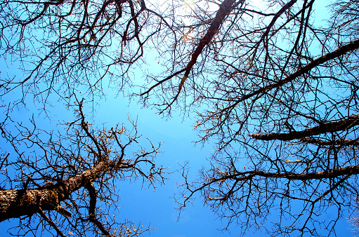 Looking to the sky between the branches of trees. 500874444