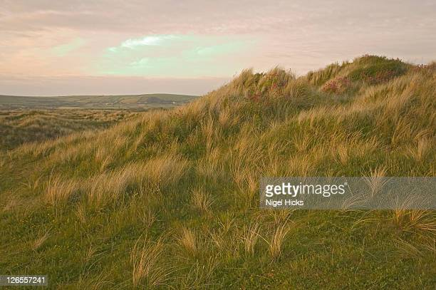 looking towards the horizon at twilight across a grass-covered dune in braunton burrows, designated a unesco biosphere reserve, on the north devon coast - biosphere planet earth stock photos and pictures