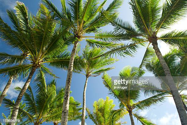 Looking up at palms.