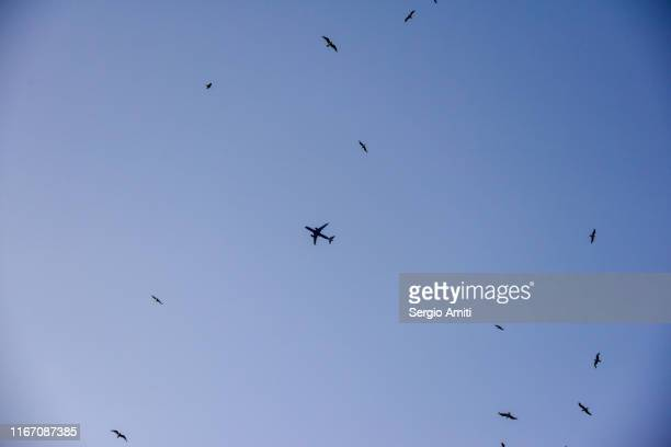looking up at plane silhouette among birds - sergio amiti stock pictures, royalty-free photos & images